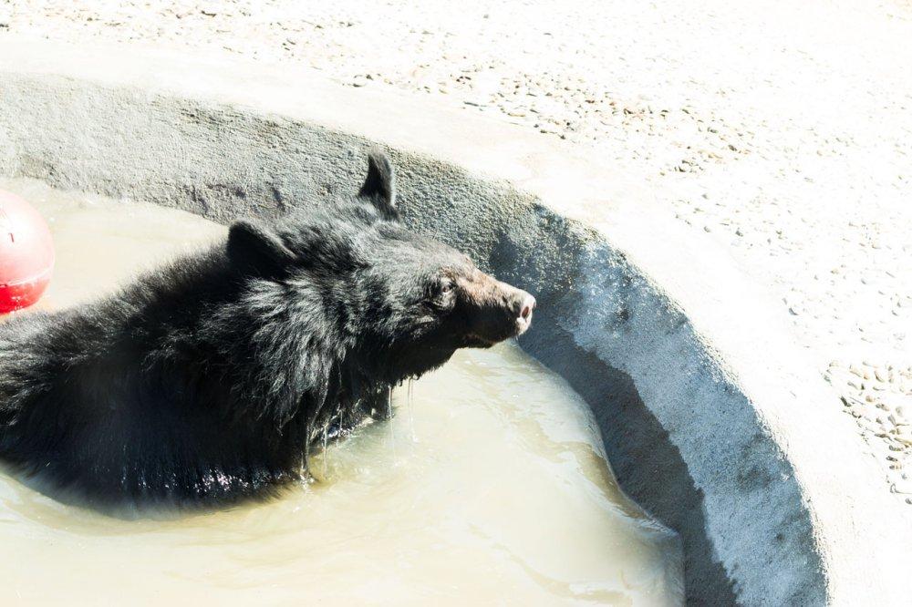 Medvěd Zoo Chleby